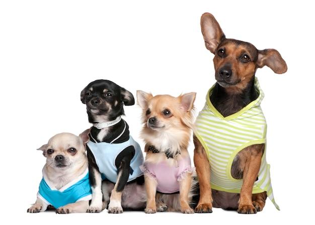 Группа из 4 собак, наряженных