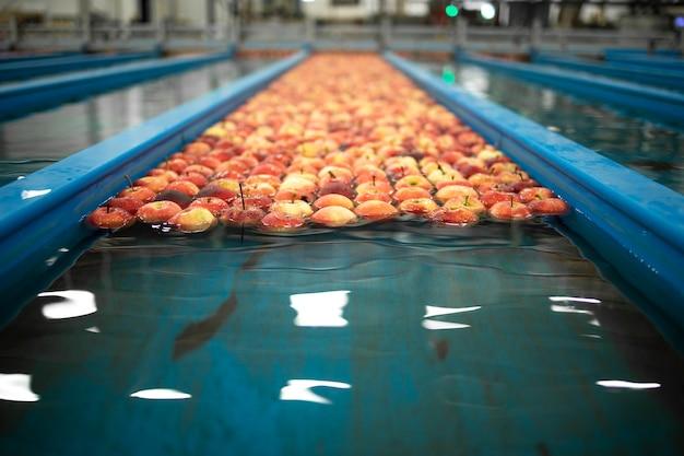 식품 가공 공장의 물 컨베이어 탱크에 잠긴 사과 그룹