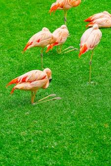 公園の芝生の上の美しいフラミンゴのグループ