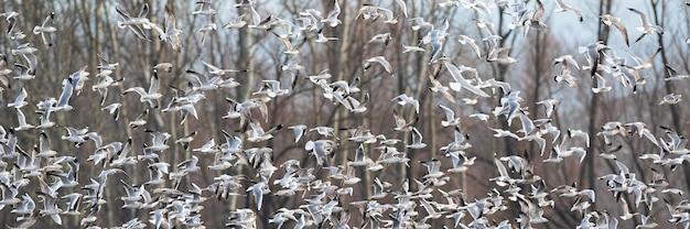 冬の森の飛行中のユリカモメのグループ