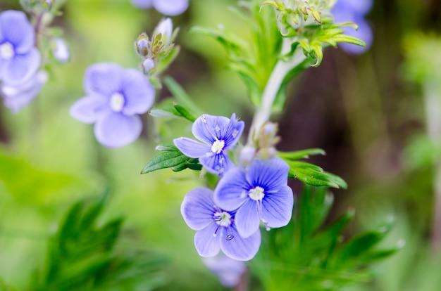 푸른 잔디에서 파란 꽃의 그룹