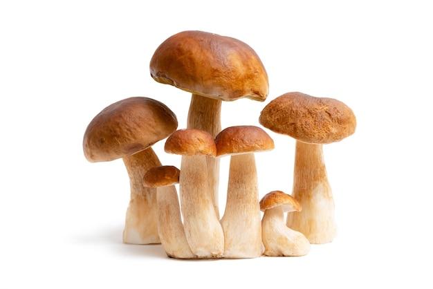 Группа коричневых крышек boletus edulis, изолированные на белом фоне. съедобные грибы на кухне. никто