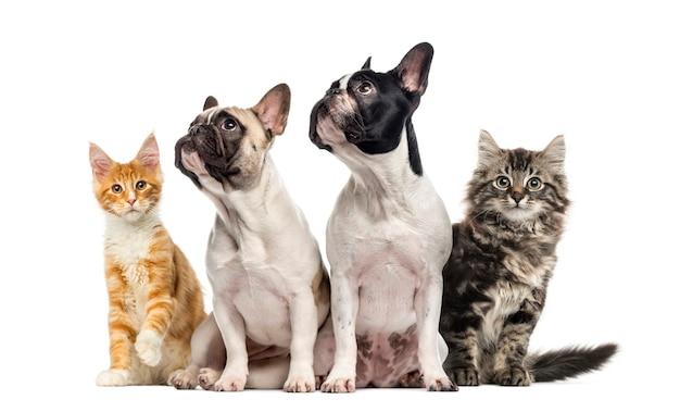 白で隔離されて座っている猫と犬のグループ