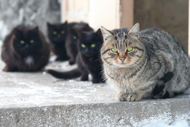 座ってカメラを見ている猫のグループ