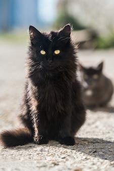 座って直接見ている猫のグループ