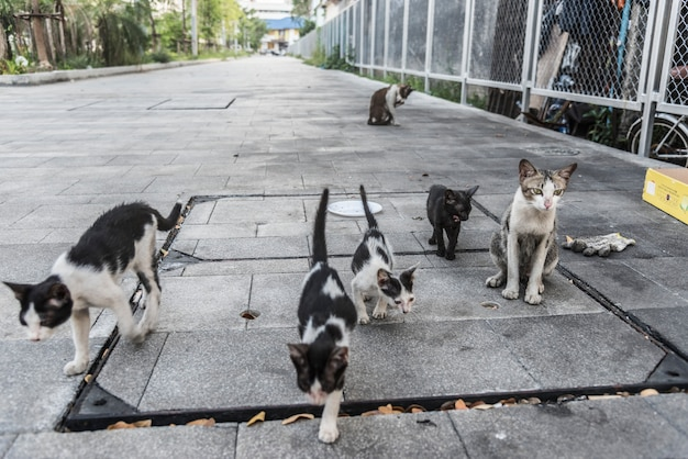 かわいい通りの猫と子猫のグループ