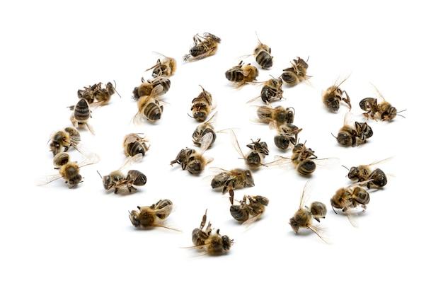 白で隔離された死んだ蜂のグループ