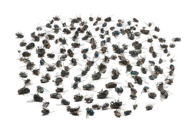 Группа мертвых мух, изолированные на белом фоне