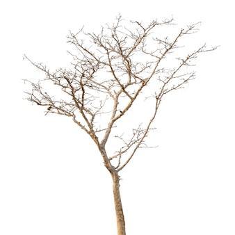 Группа мертвого дерева, изолированные на белом фоне
