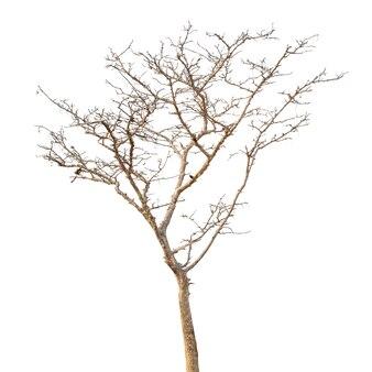 白で隔離される枯れ木のグループ