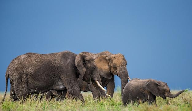 Группа слонов в саванне