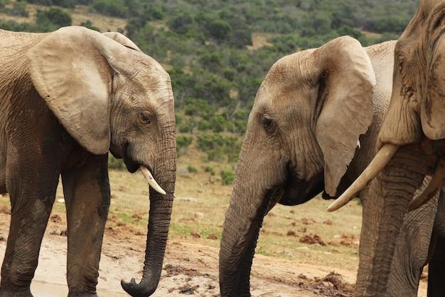 ジャングルの真ん中にある水たまりの近くで遊んでいる象のグループ