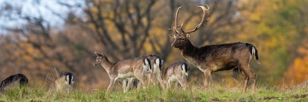 수평 샷에서 필드에 서 있는 휴경 사슴의 그룹