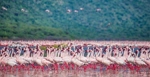 離陸前のフラミンゴのグループ