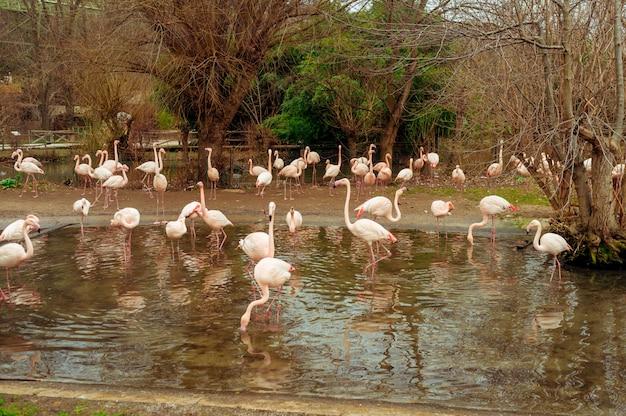 밝고 화창한 날에 연못에 넘어 가고 플라밍고의 그룹