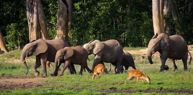 森の端にあるマルミミゾウのグループ