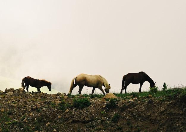 흰 구름 배경에서 말과 새끼의 그룹입니다. 야생 방목 동물의 실루엣