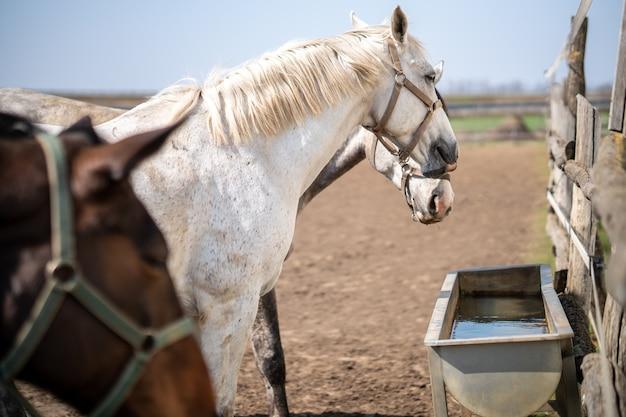 農場の飼い葉桶の近くで手綱を持った馬のグループ