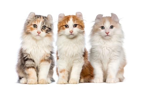 Группа котят