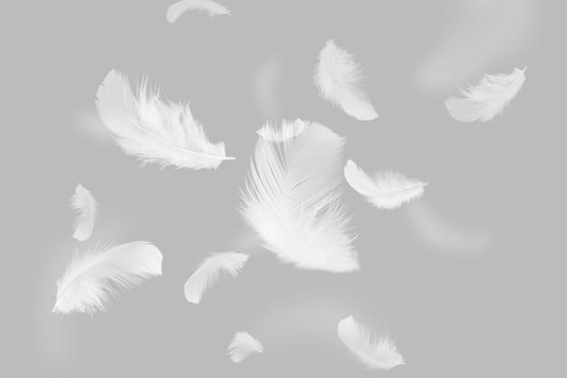 Группа света белые перья, плавающие в воздухе