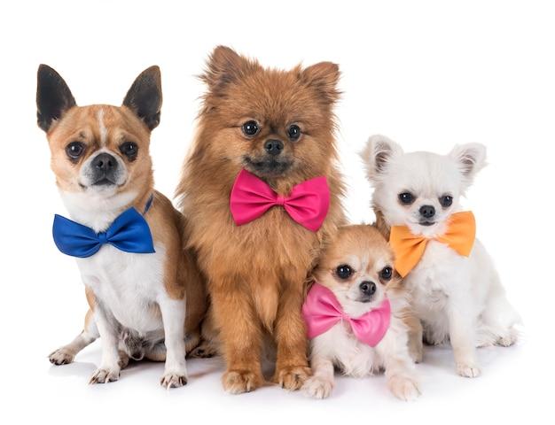 小さな犬のグループ