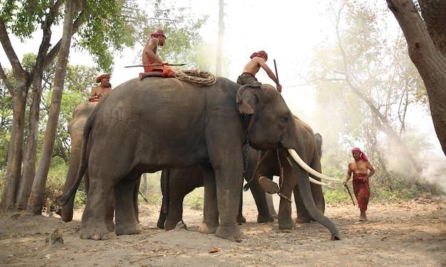 숲에서 mahouts와 코끼리의 그룹