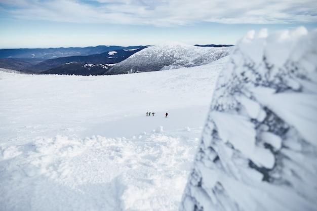 언덕에 걷는 산악인의 그룹은 신선한 눈으로 덮여있다. 카르 파티 아 산맥