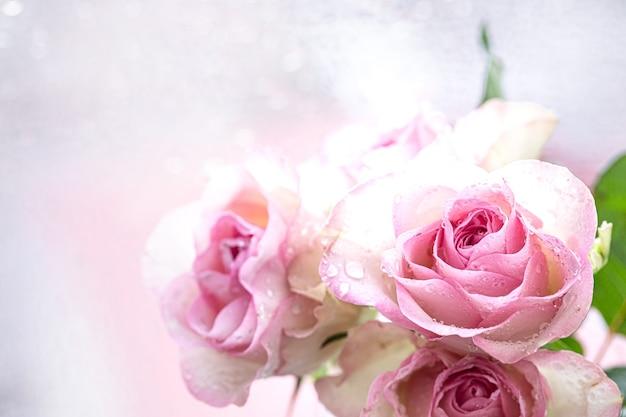 물 방울과 옅은 분홍색 장미의 그룹