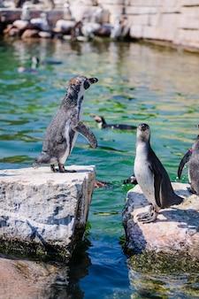 동물원 공원에서 펭귄의 그룹 프리미엄 사진