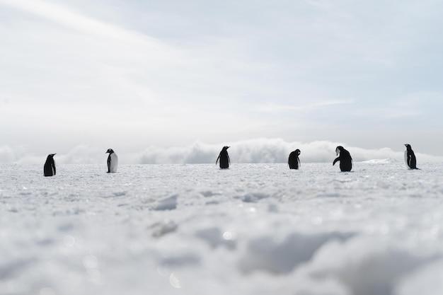 얼어붙은 해변을 걷고 있는 펭귄 그룹
