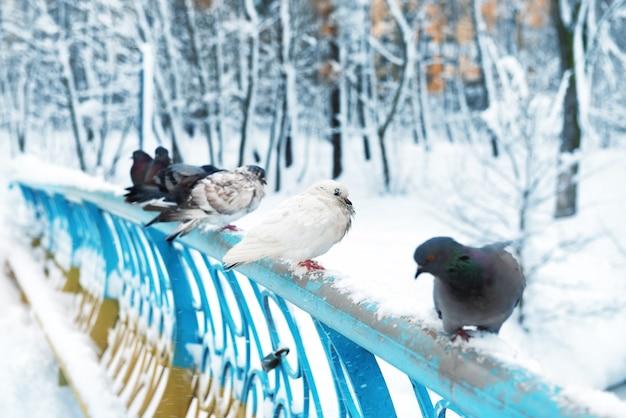 公園のレールに座っているハトのグループ
