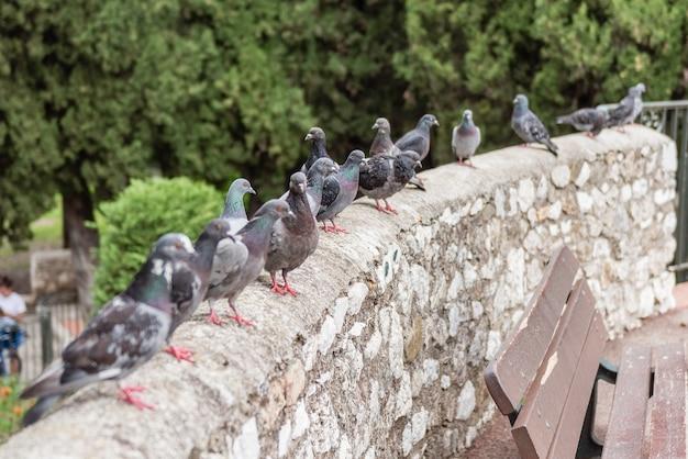 Группа голубей, стоящих на стене в районе симье в ницце, лазурный берег, франция