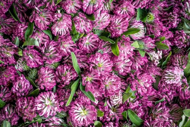 ピンクのクローバーの花のグループ