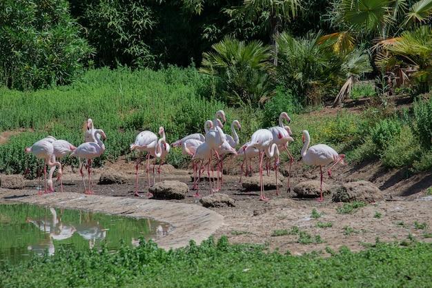 自然の庭のピンクのフラミンゴのグループ