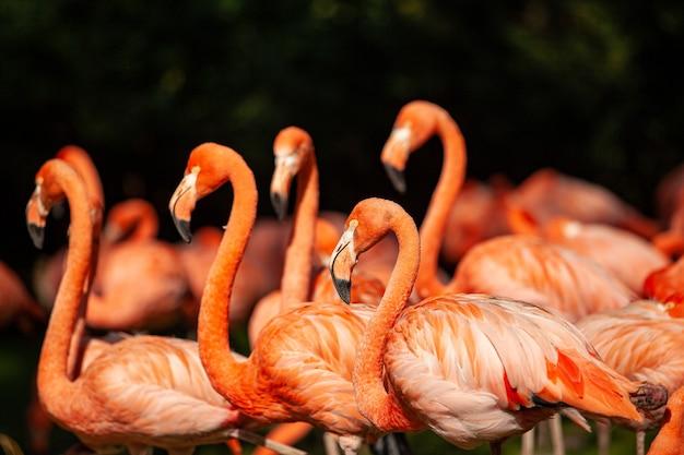 緑の牧草地にあるピンクのフラミンゴのグループ
