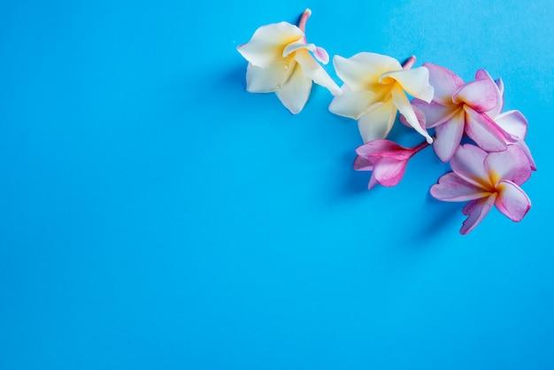 青色の背景にピンクのフランジパニのグループ
