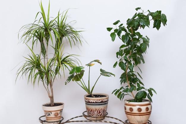 Группа горшечных растений