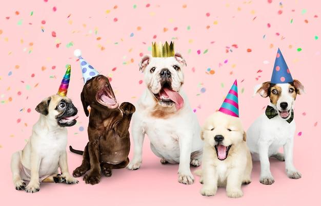Группа щенков, празднующих новый год