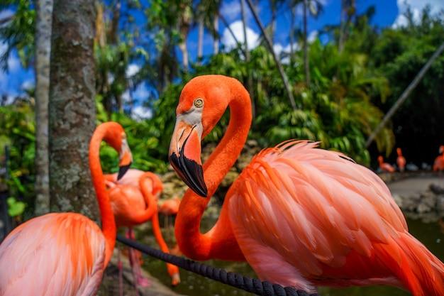 Группа красных фламинго в воде на размытом зеленом фоне.