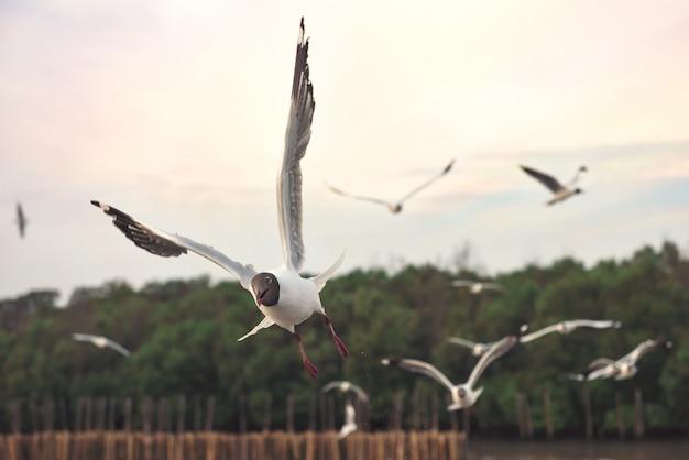 Группа в составе чайки летая над морем bangpu в samut prakarn, таиланде. чайки в действии, летающие в небе