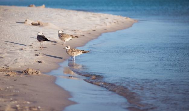 Группа чаек над морем.