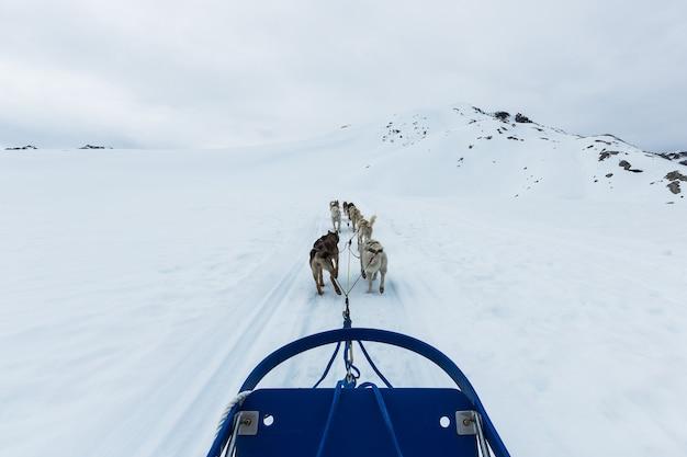 アラスカ州スキャグウェイのそり犬のグループ