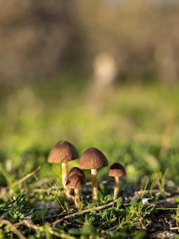 牧草地の小さなキノコのグループ。