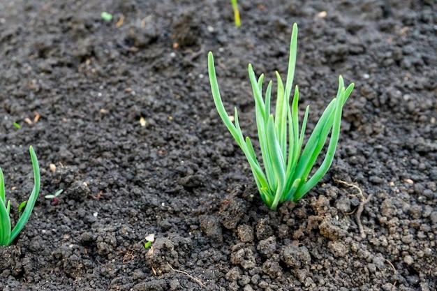 土壌の始まりのグループ