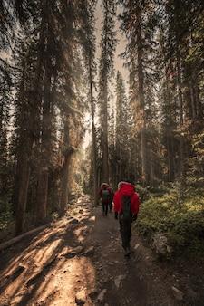 Группа путешественников в осеннем лесу с солнечным светом, сияющим в национальном парке