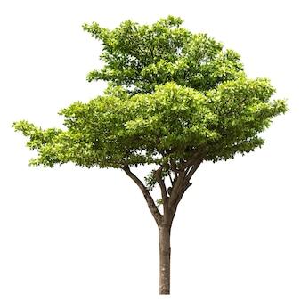 Группа дерева, изолированные на белом фоне для дизайна материала Premium Фотографии