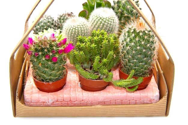 鉢植えのさまざまな多肉植物のグループ
