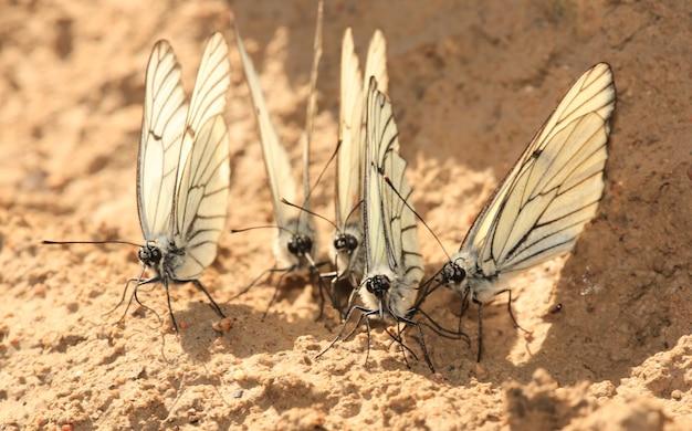 Группа белых бабочек на природе