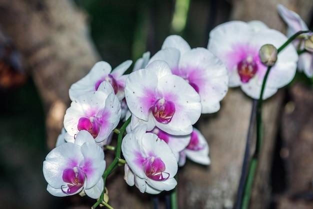 흰색 보라색 난초 꽃의 그룹