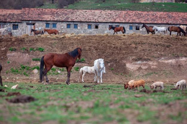 風景の中の野生の馬のグループ